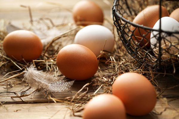 nuevos Nana orgánicos de gallinas saludables eco bio